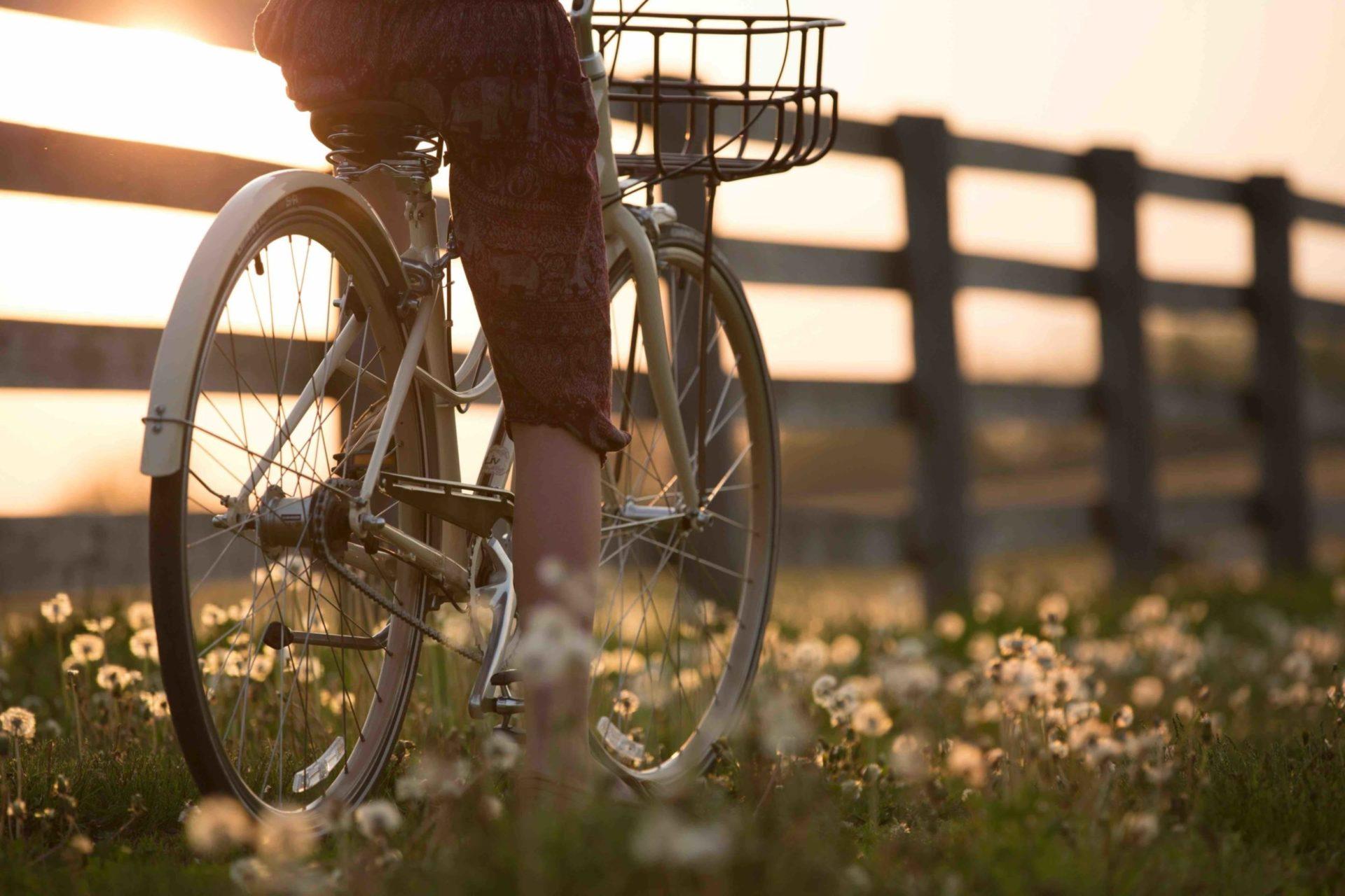 bicicletta bikes tour